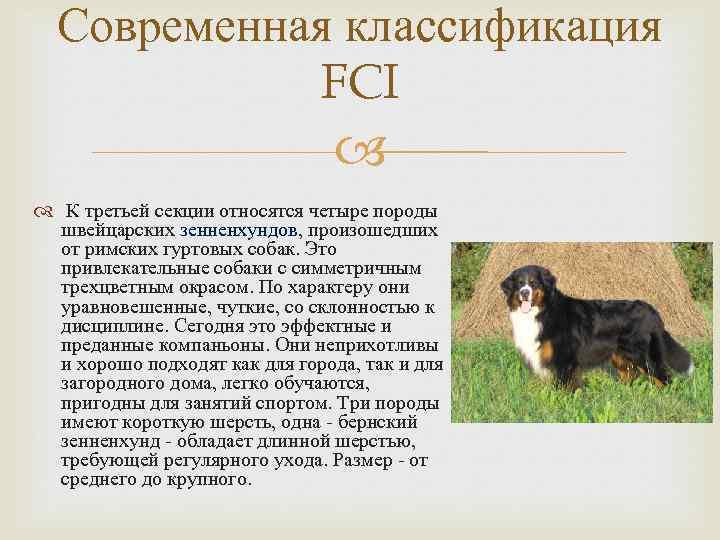 К какому виду относятся собаки: биологическая классификация, по размерам и назначению