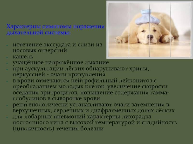 Причины одышки у собаки