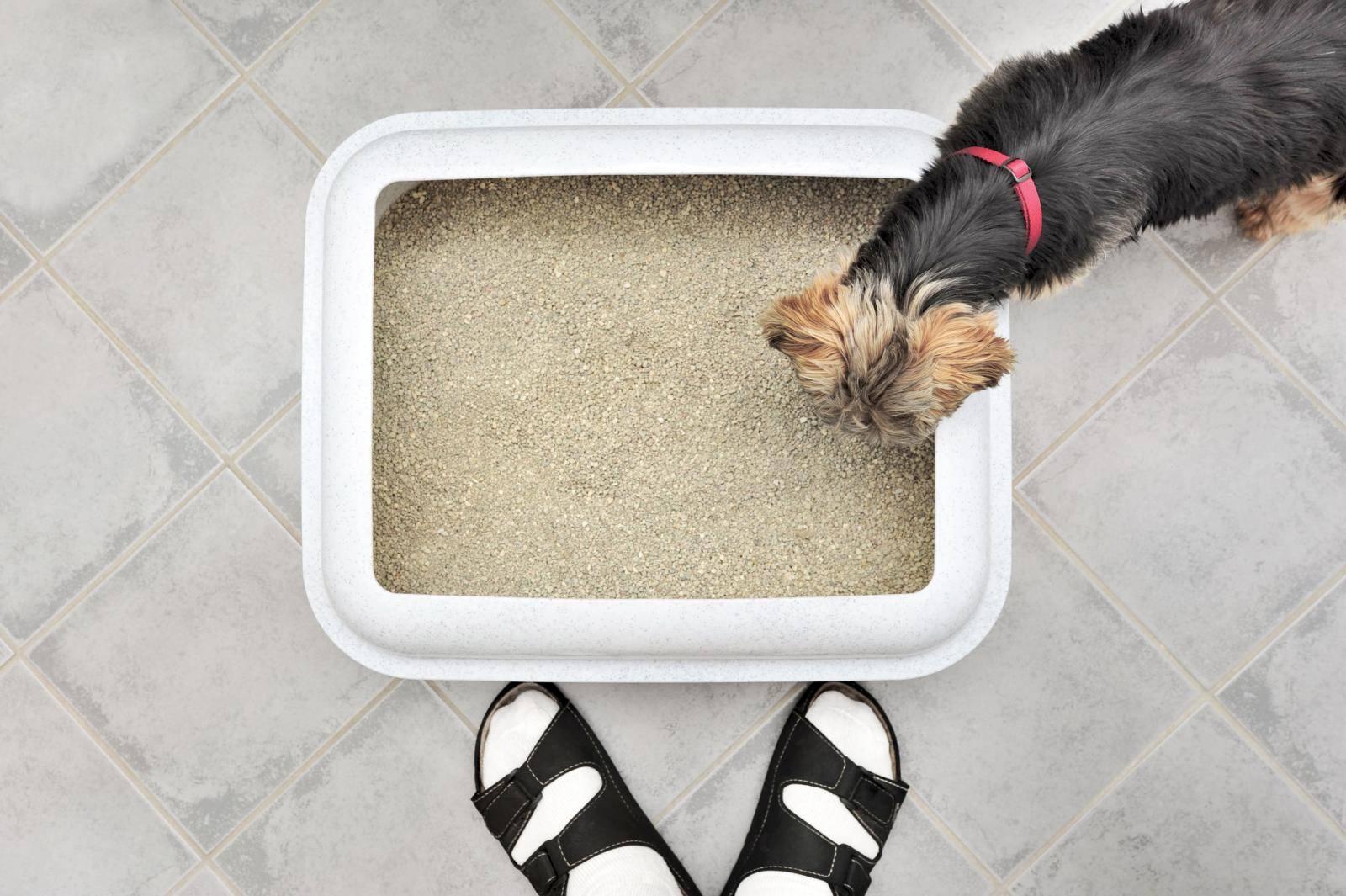 Как приучить щенка к лотку с наполнителем