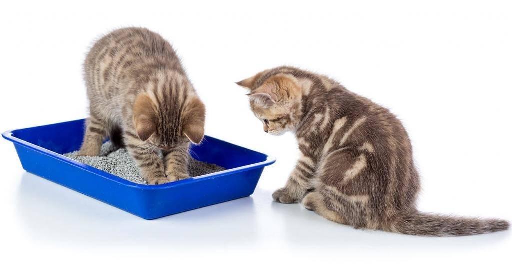 Как приучить кота к лотку на новом месте?