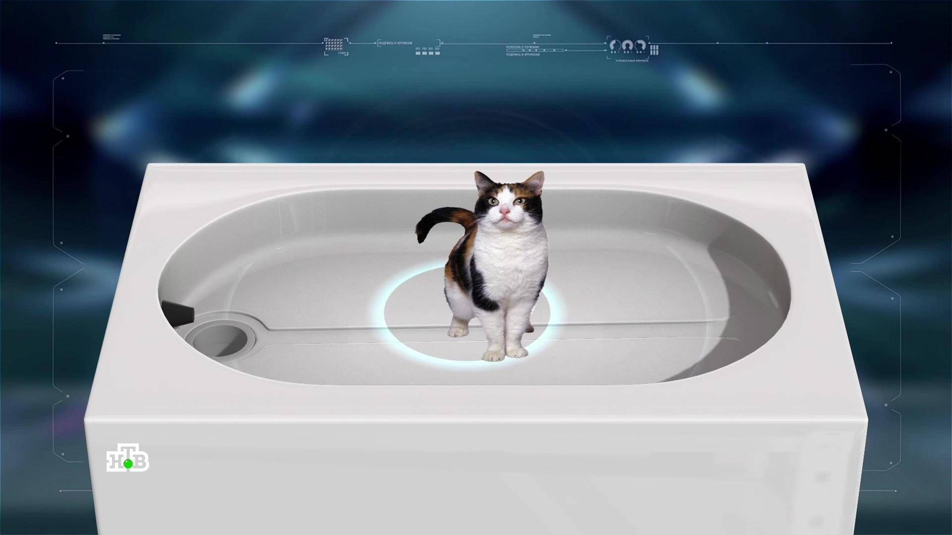 Рейтинг автоматических туалетов для кошек в 2021 году