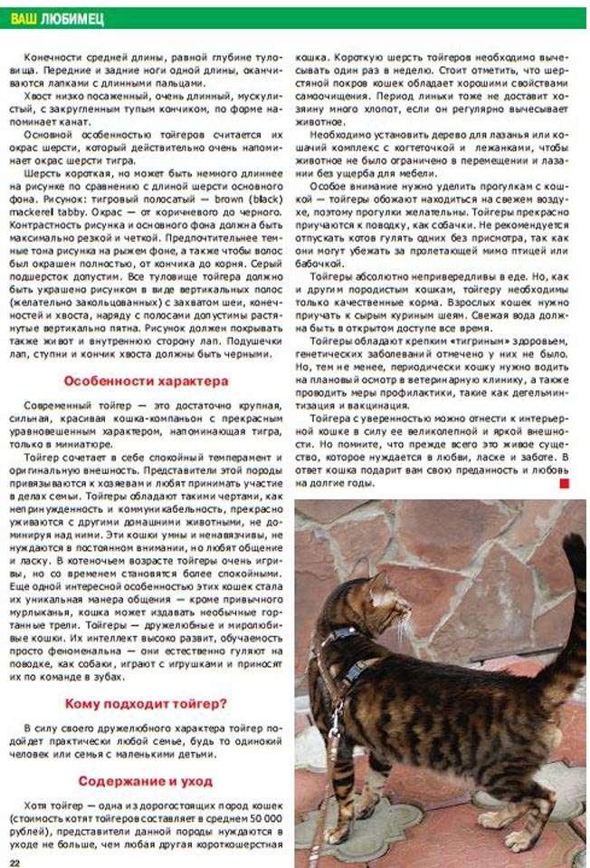 Тойгер (55 фото): описание кошек и котов породы тойгер, особенности характера котят. содержание, уход и кормление