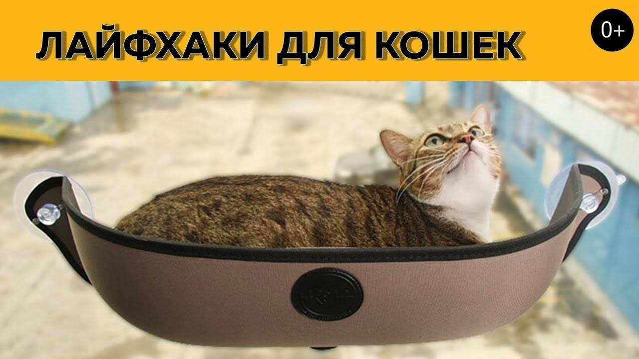 10 гениальных лайфхаков для котов и кошек