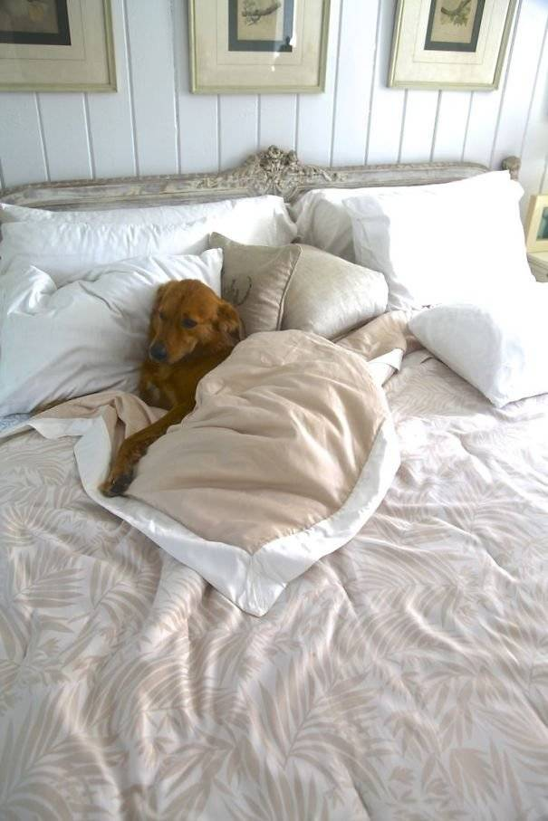 """Как отучить кота спать в постели хозяев   блог ветклиники """"беланта"""""""