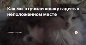 Как отучить кота гадить в неположенном месте, причины по которым кот гадит где попало