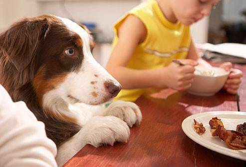 Правила выбора щенка немецкой овчарки: в каком возрасте лучше приобрести и как отличить от дворняги