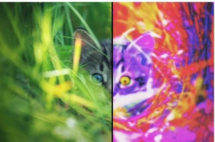 Как видят кошки и коты наш мир | какие цвета
