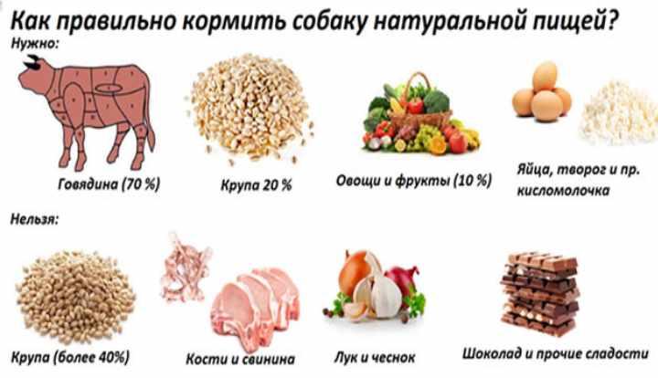 Чем и как правильно кормить щенка на каждом этапе развития?
