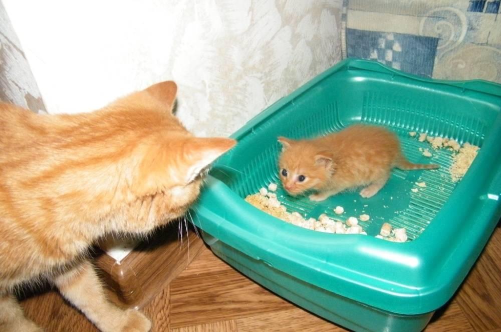 Кошка не пьет воду, что делать?   дети фауны