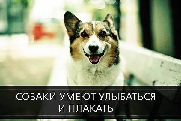 Почему собаки плачут? — сайт эксперта по животным — howmeow