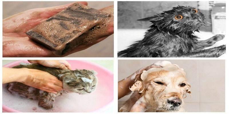 Использование хозяйственного и дегтярного мыла против перхоти