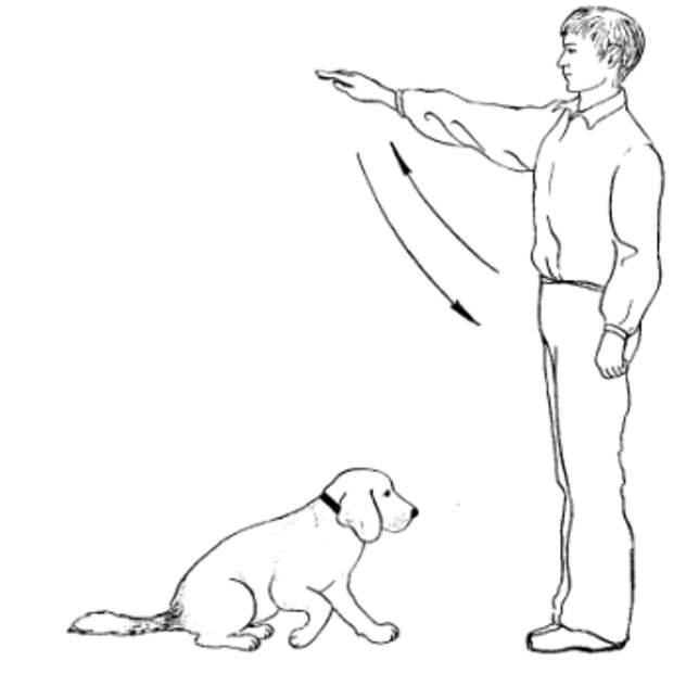 Как научить щенка команде «ко мне»: 12 правил