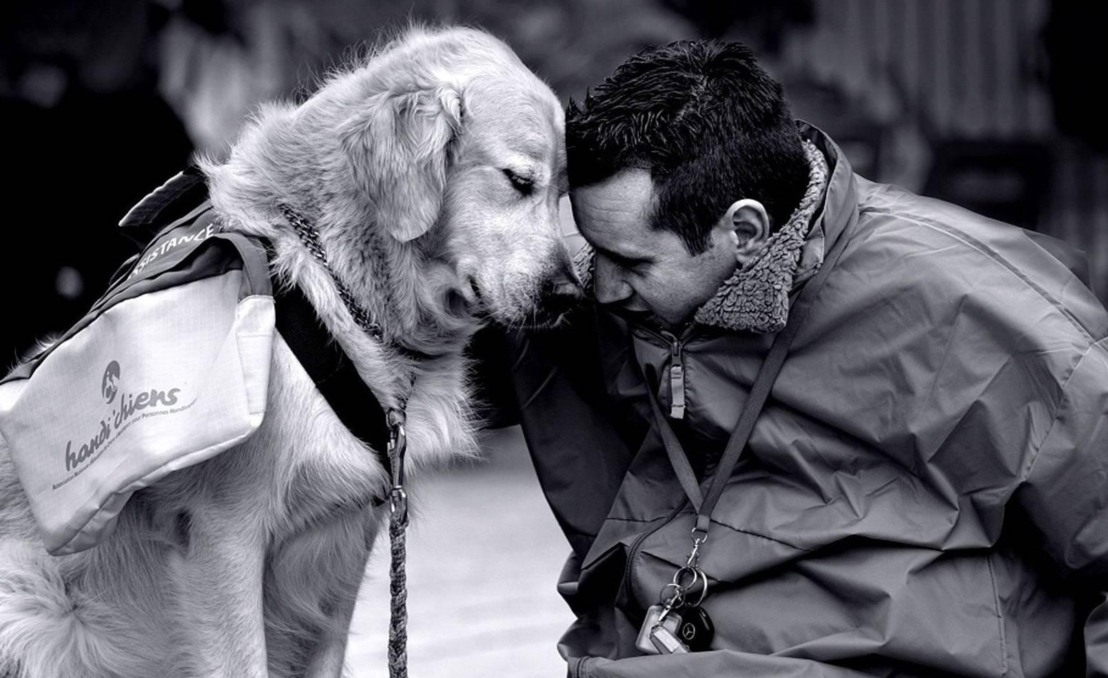 10 причин, почему собака - лучший друг человека