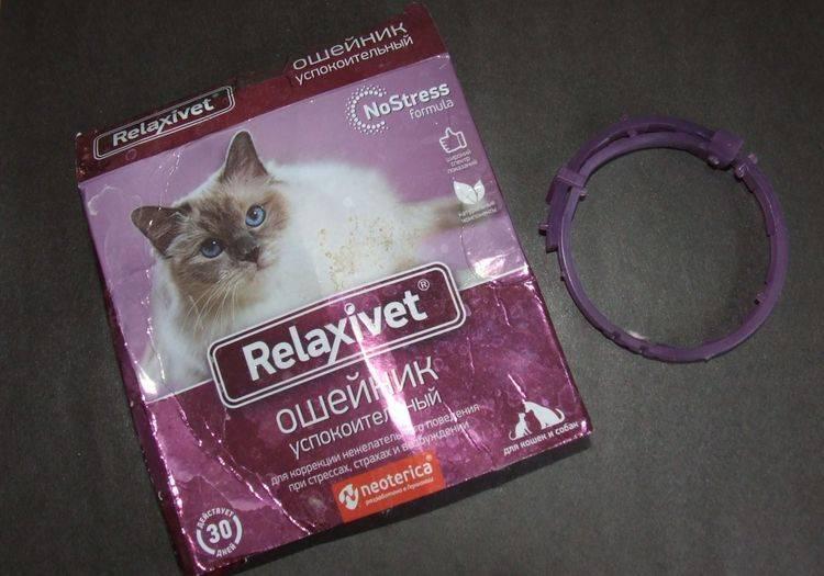 7 лучших успокоительных средств для кошек