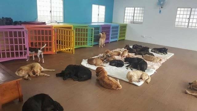 5 лучших приютов для собак в москве