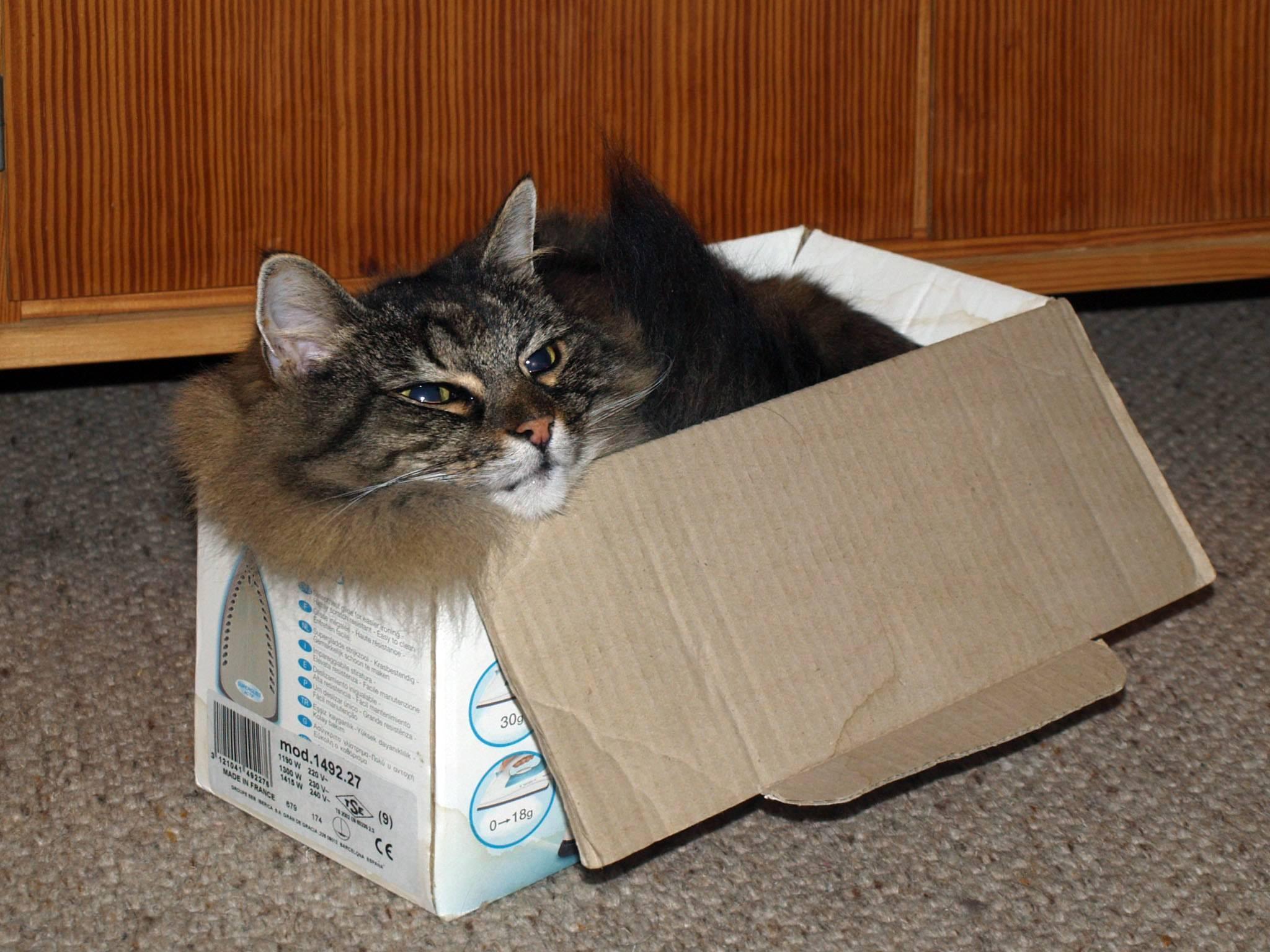 Как переезжать с кошкой в другой город?