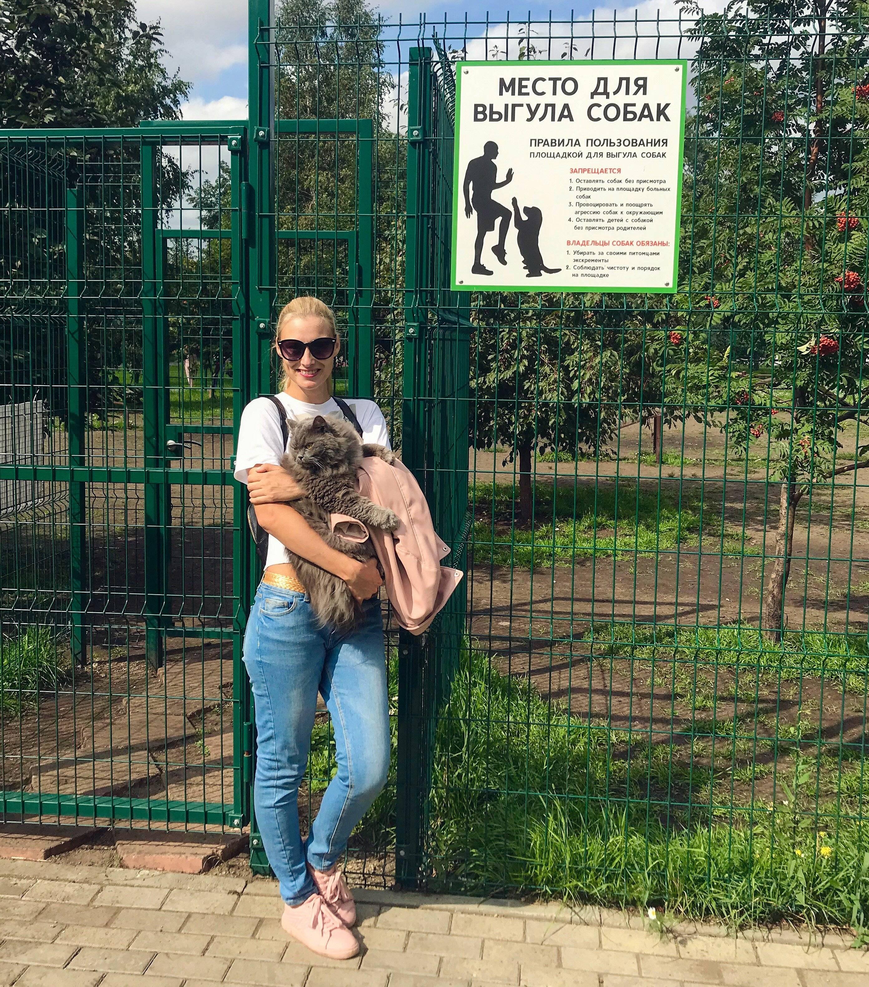 Обзор законов, правил, запретов и штрафов по выгулу и содержанию собак