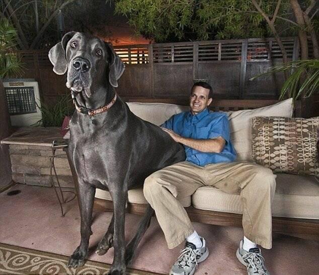 Породы собак про которые вы не слышали