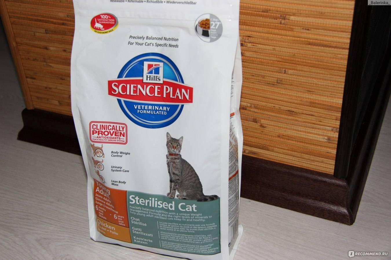 Сердечная недостаточность и другие болезни сердца у кошек | hill's pet