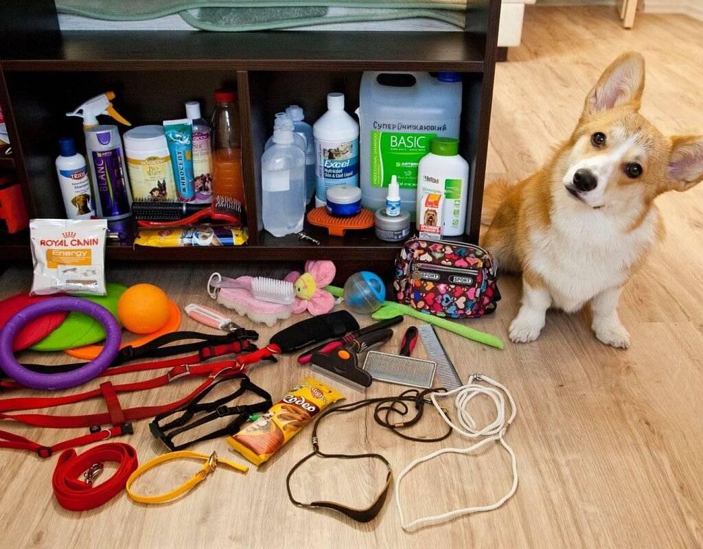 Первые дни щенка в доме: что нужно подготовить