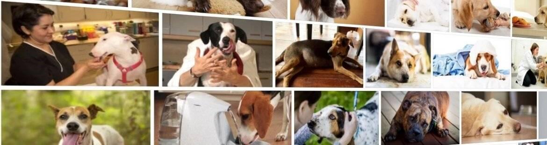 """У собаки болит живот -  что делать и лечение. ветеринарная клиника """"зоостатус"""""""