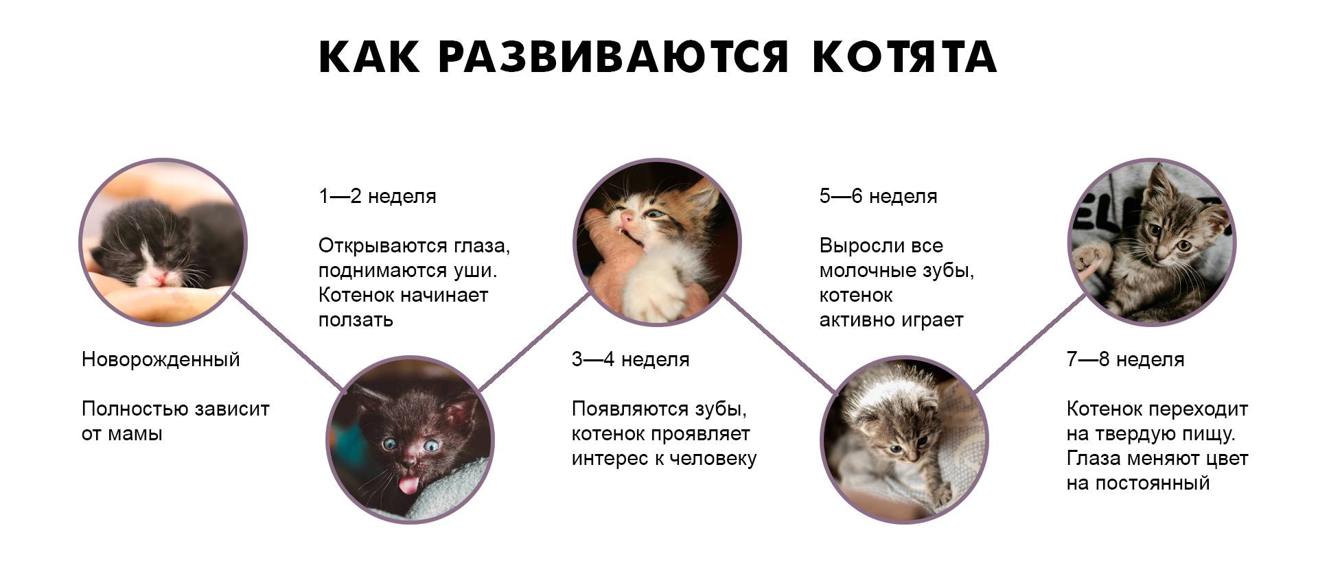 Как понять, что кошка рожает и какие действия предпринимать при неудачных родах