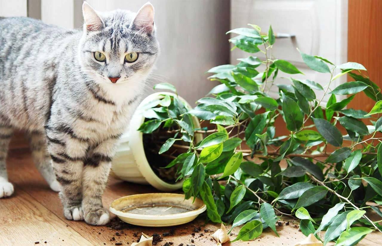 Что значит, если моча кота стала сильно пахнуть