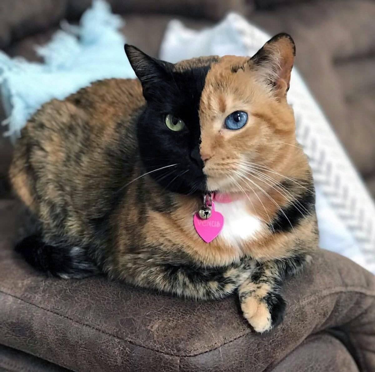 Самые лучшие кошки: спокойные, общительные, топ 10