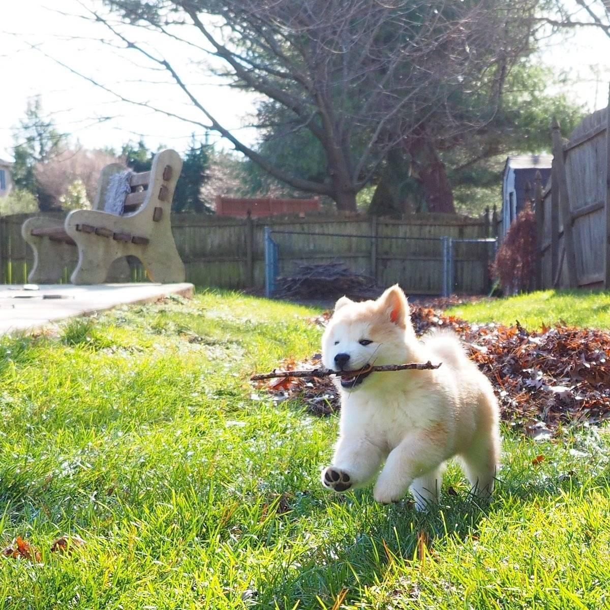 Метисы шарпея: популярные помеси питомцев и похожие породы собак