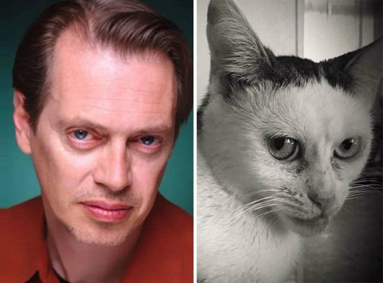 Понимают ли кошки и коты человеческую речь | людей