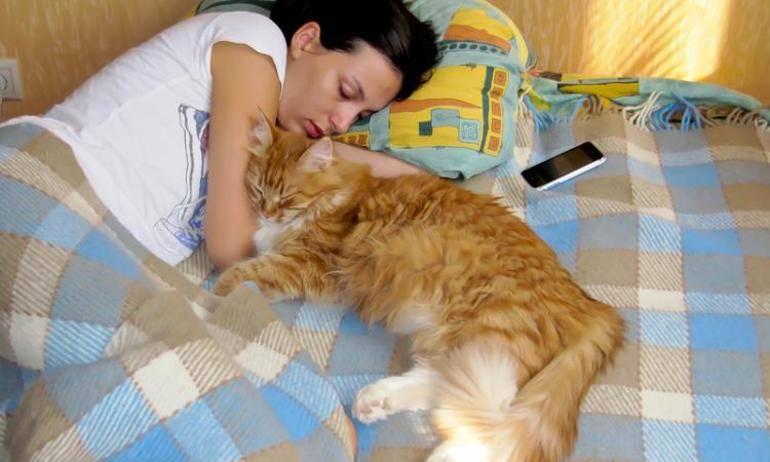 Где кот спит, там и болит? почему наши кошки так любят спят на нас: расшифровываем позы четвероногих питомцев