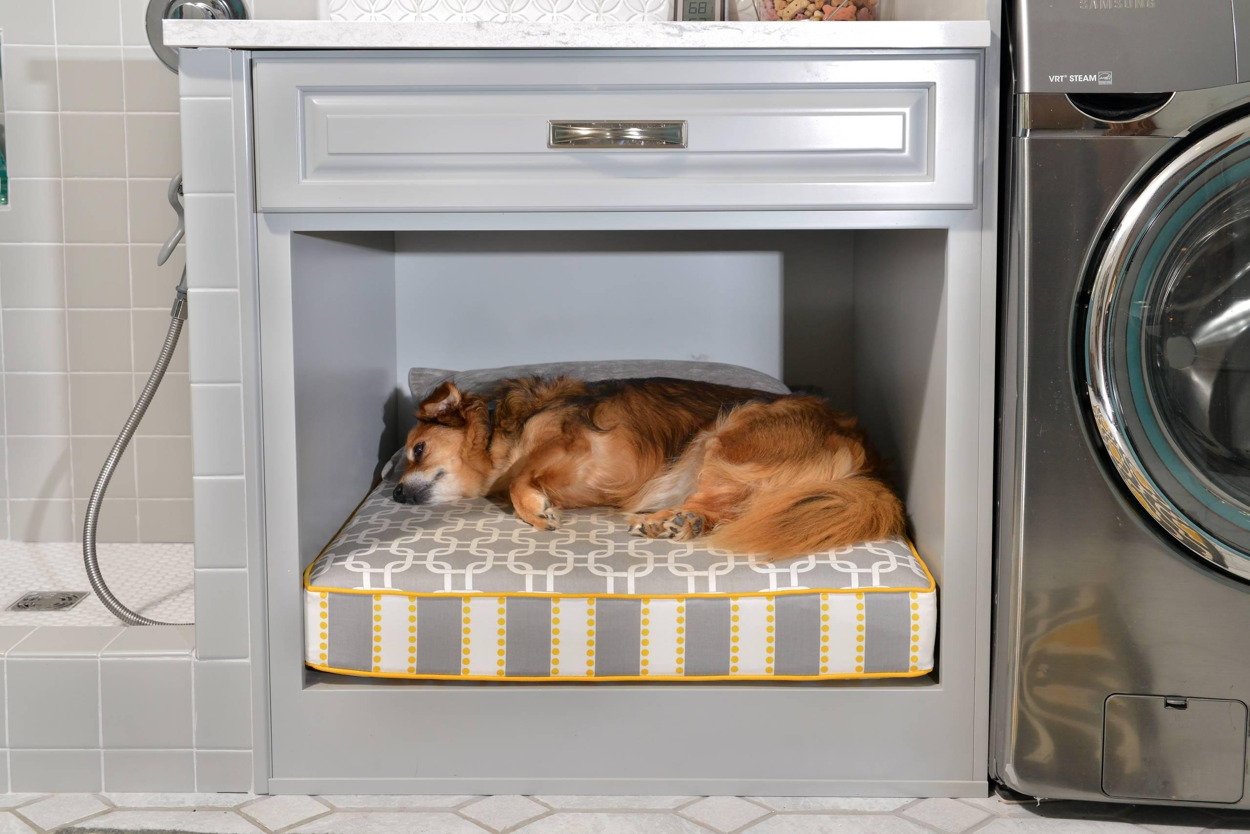 Документы ркф на собаку: что это, какие обязательные, зачем нужны