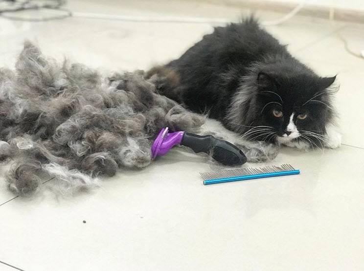 Линька у кошек: причины, симптомы и меры, облегчающие этот процесс