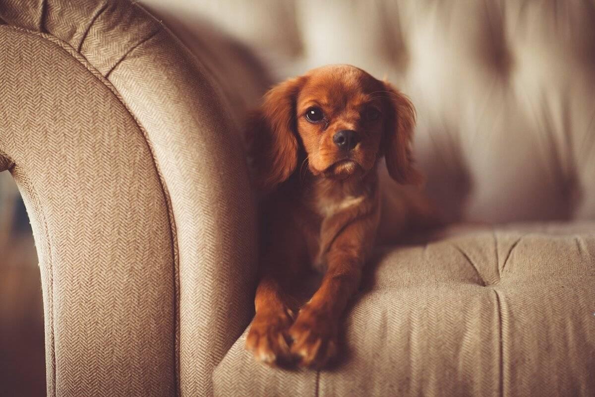 Как отучить собаку грызть мебель – 15 лучших способов + советы!