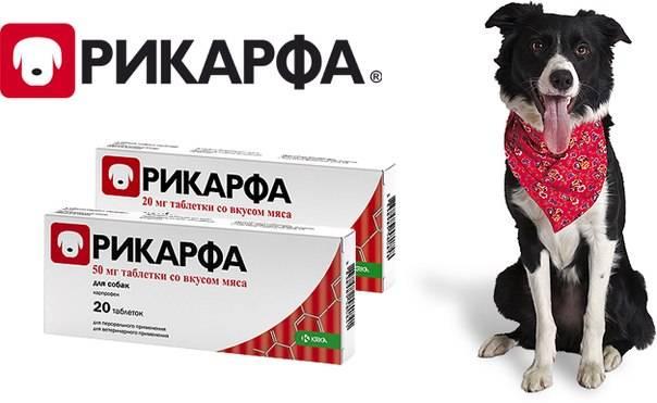 Насколько эффективен препарат для собак рикарфа и как его правильно использовать?