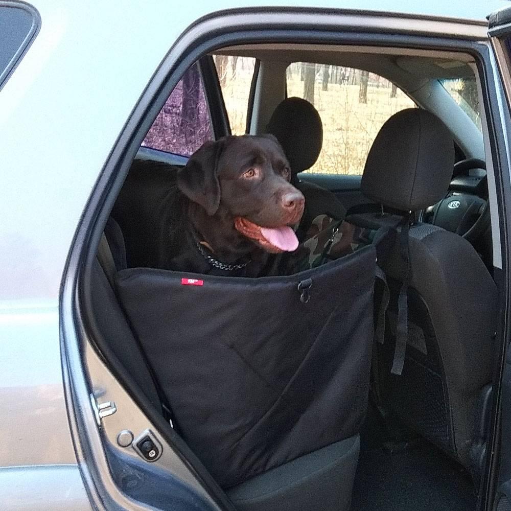 Чехлы в машины для перевозки собак: накидки на заднее сиденье автомобиля и чехол-гамак для багажника, выбор автомобильных защитных чехлов для перевозки собак