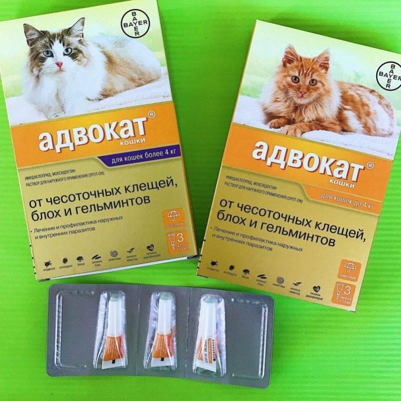 Адвокат для кошек 4-8 кг упак 3 пипетки