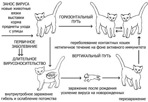 Со скольки месяцев можно глистогонить котят