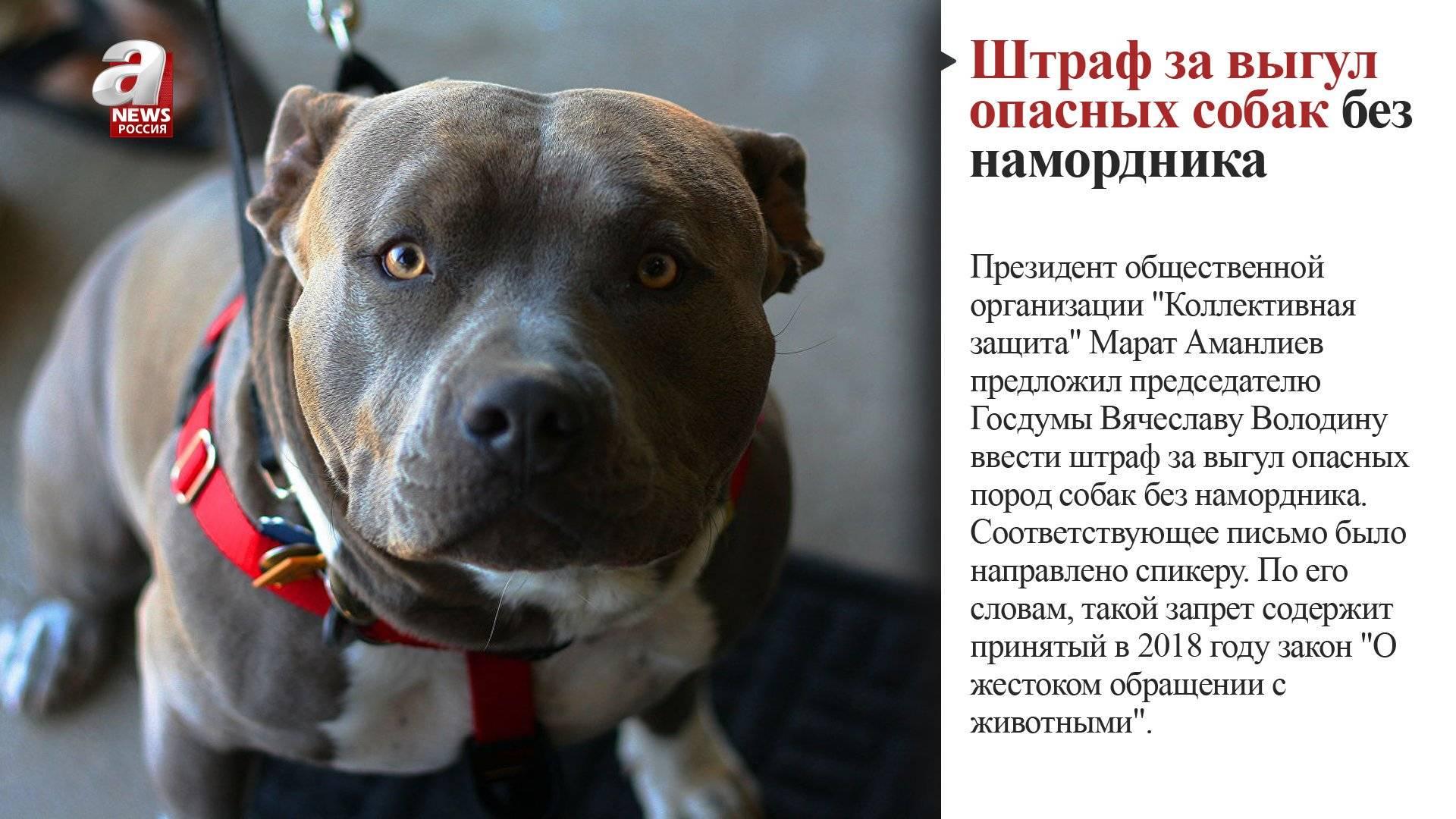 Сокращения перечня потенциально опасных собак. какие породы вошли в обновленный список?