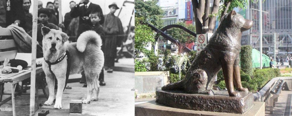 Памятник хатико в японии. история четвероногого друга
