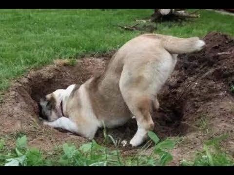 Как похоронить собаку: правила и обзор законных мест