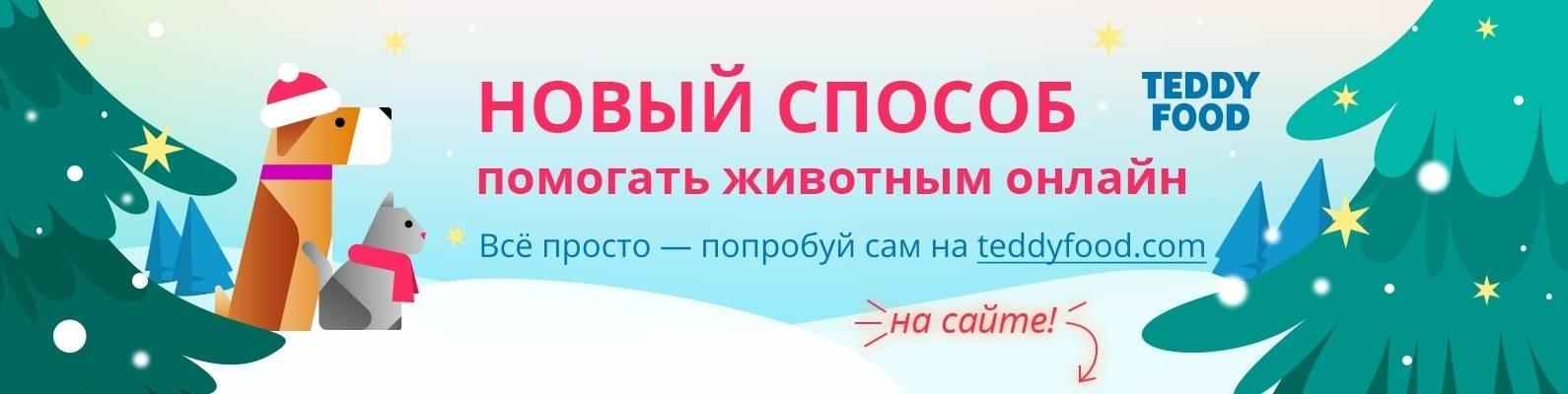 В россии запущен необычный сервис помощи бездомным животным teddy food