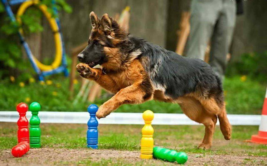 Как дрессировать собаку - практические советы.
