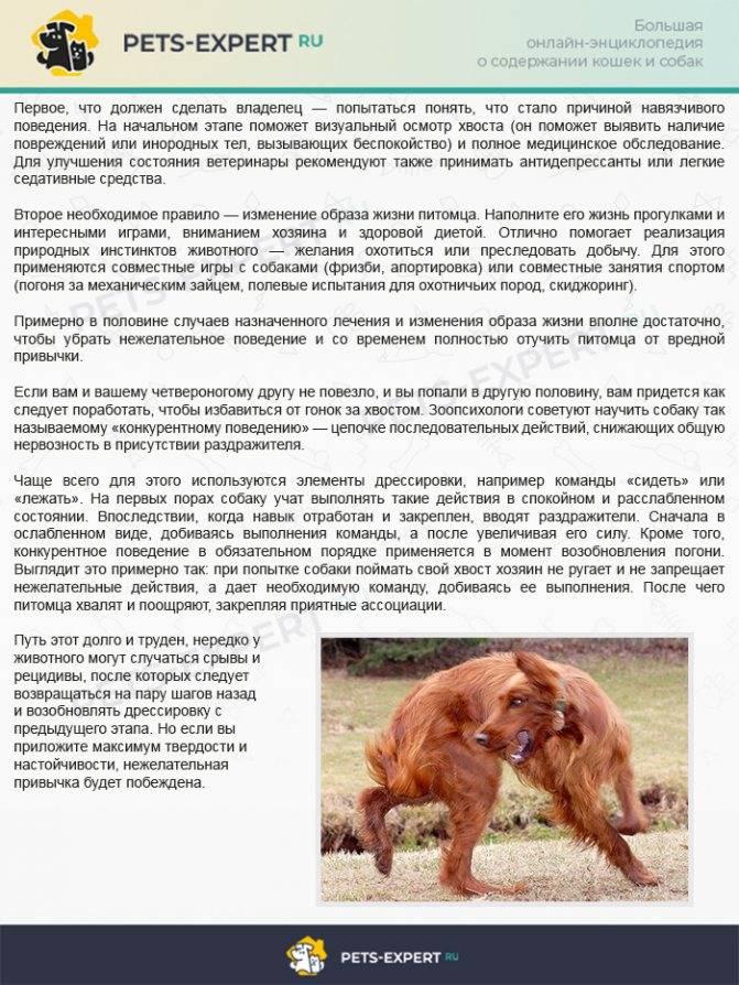 Обсессивно-компульсивные расстройства собак (навязчивые состояния)