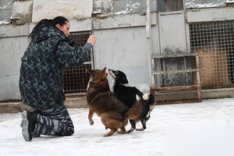 А вы слышали о собаке сулимова?