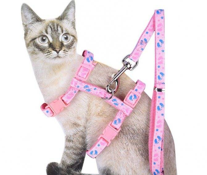 Примеры как правильно надевать шлейку, варианты как приучить кошку к ошейнику