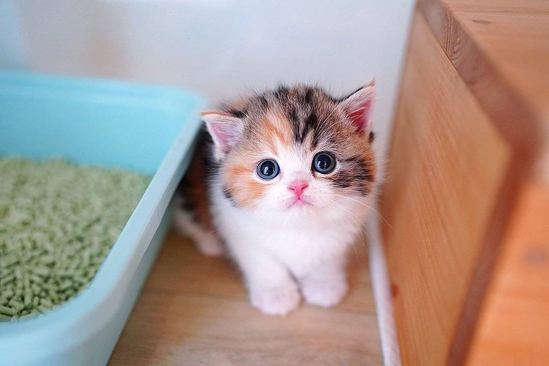 Самая маленькая порода кошек: кто меньше всех?
