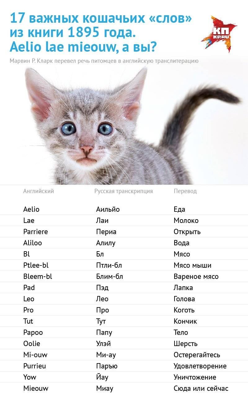 Имена и клички для котов, как назвать котенка мальчика.