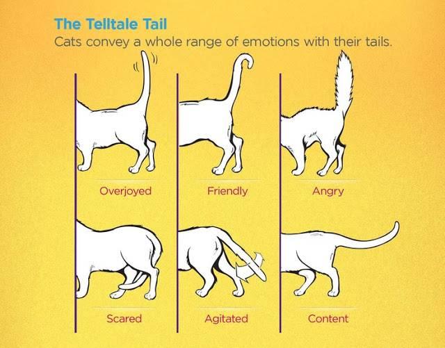 Сколько звуков у кошки – 8 голосовых способов общения домашних питомцев