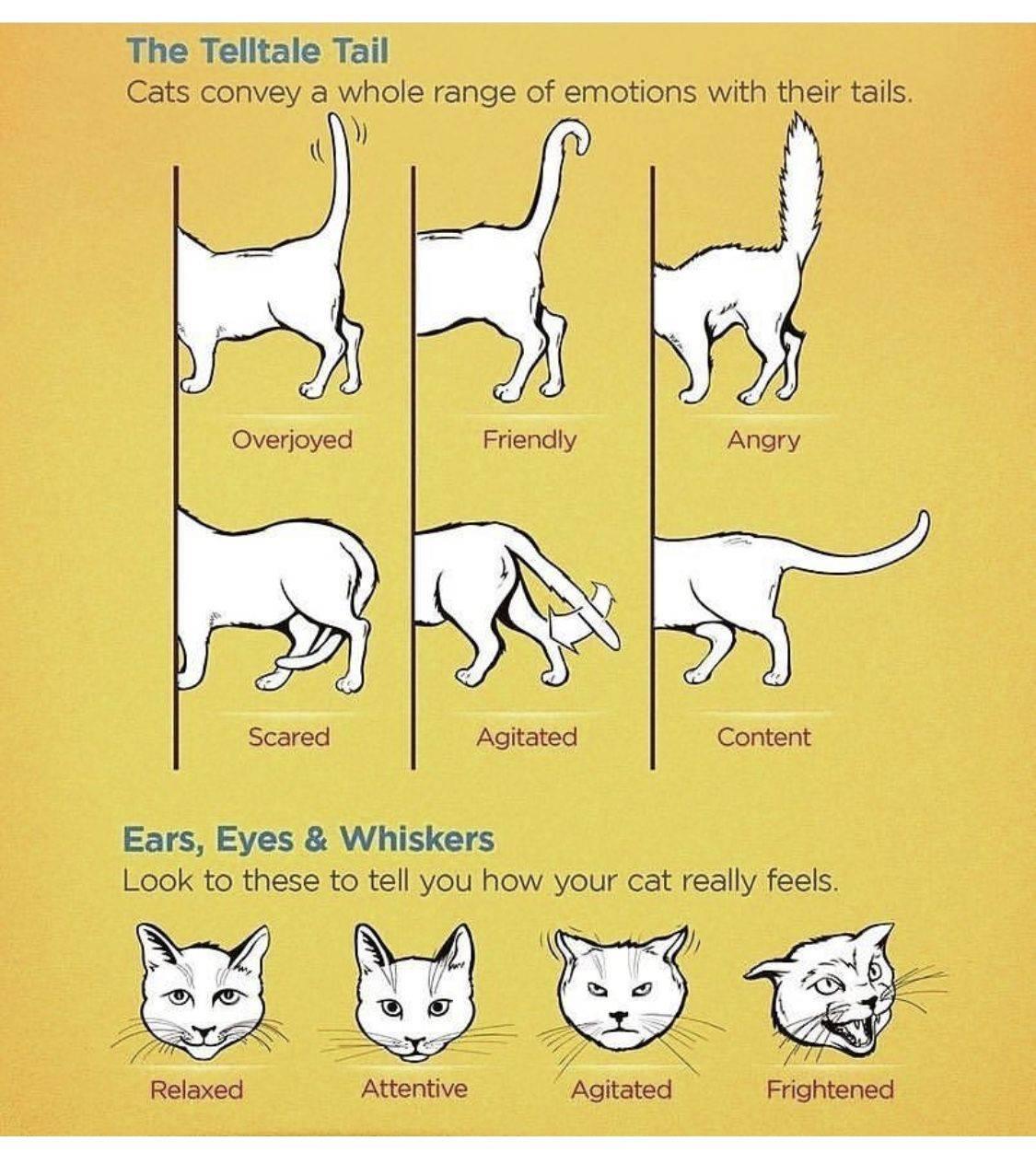 Как понять, что говорит кот